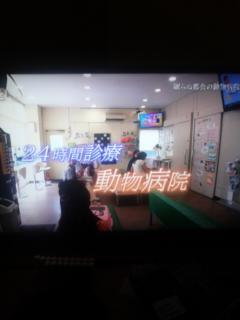 [TV]NHKドキュメント72hours<br />  「眠らぬ都会の動物病院」