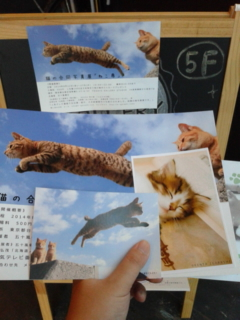[イベント]<br />  猫の合同写真展「ねこ専」 AT <br />  浅草橋TODAYS GALLERY STUDIO